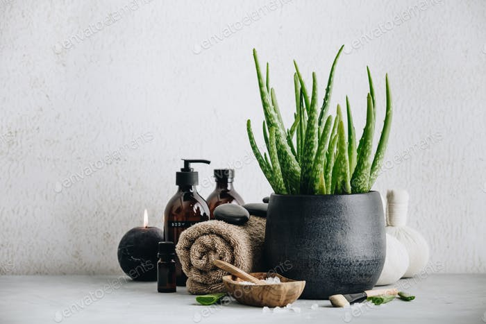 Natural Spa concept with aloe vera, space for text and logo
