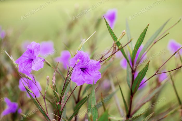 Purple flower with beautiful