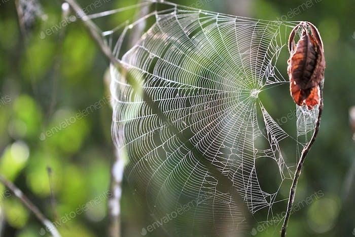 Spider Web in Costa Rica