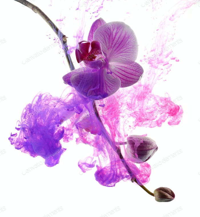 Abstract pink orchid
