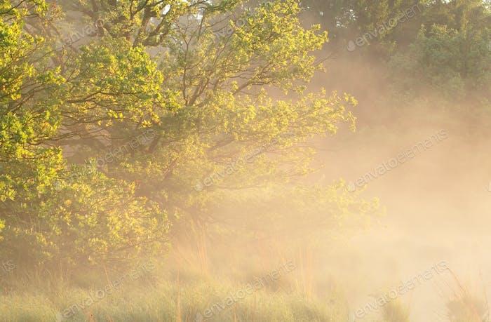 misty summer sunny morning