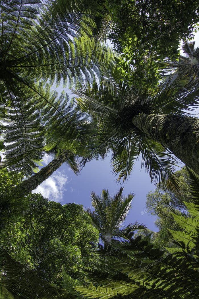 Tree canopy palm tree new zealand