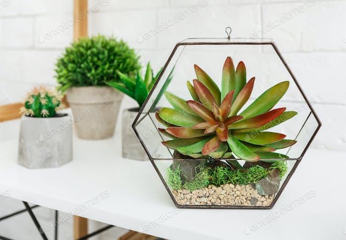 Mini garden at home concept