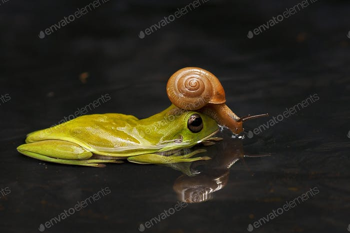 a Snail with a Frog
