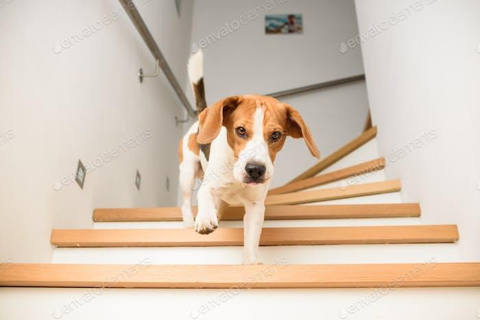 Hundegelaufen unten