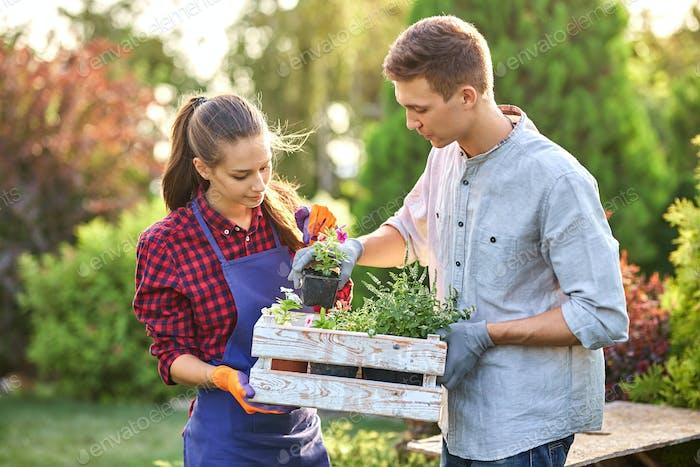 Guy und Mädchen Gärtner halten die weiße Holzkiste in den Händen und stellen dort Töpfe mit Sämlingen auf einem