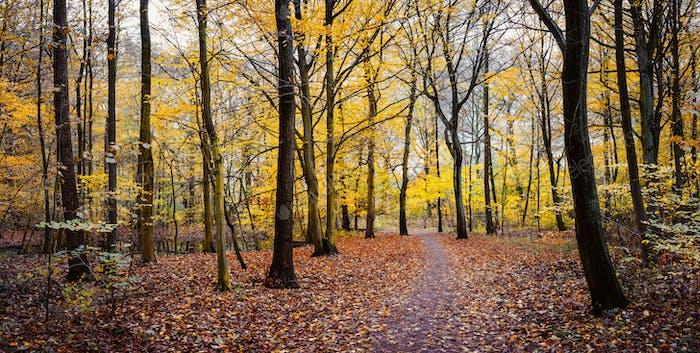 Weg zwischen gelben Bäumen im Herbst goldenen Wald. Panorama