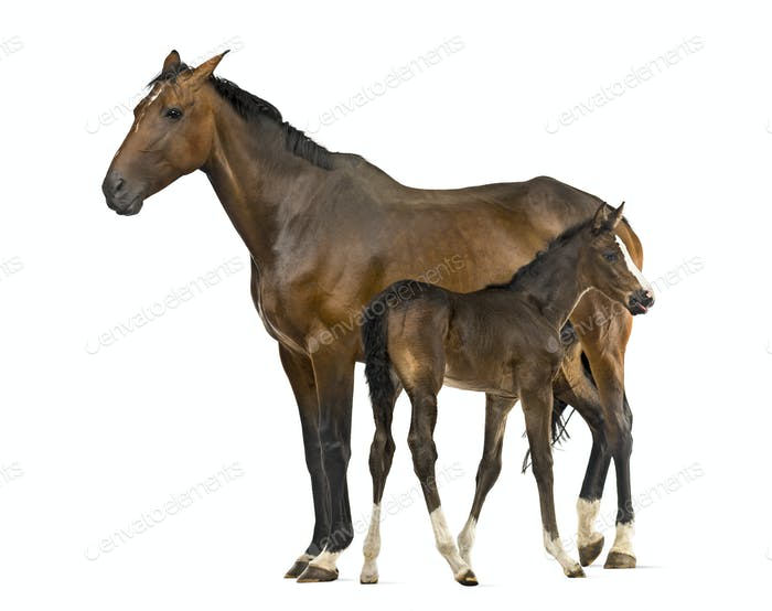 Side view of a mare and her foal