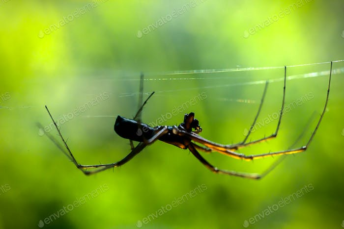 Spider on the web, spider building a web