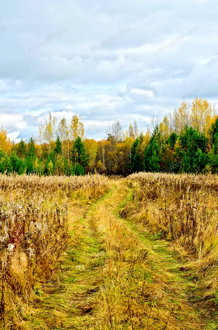 Bosque otoño y Carretera