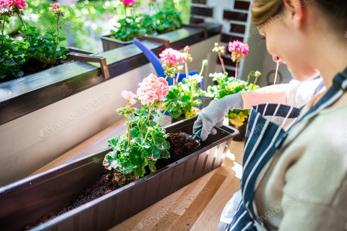 Woman plants flowers in a pot on the balcony