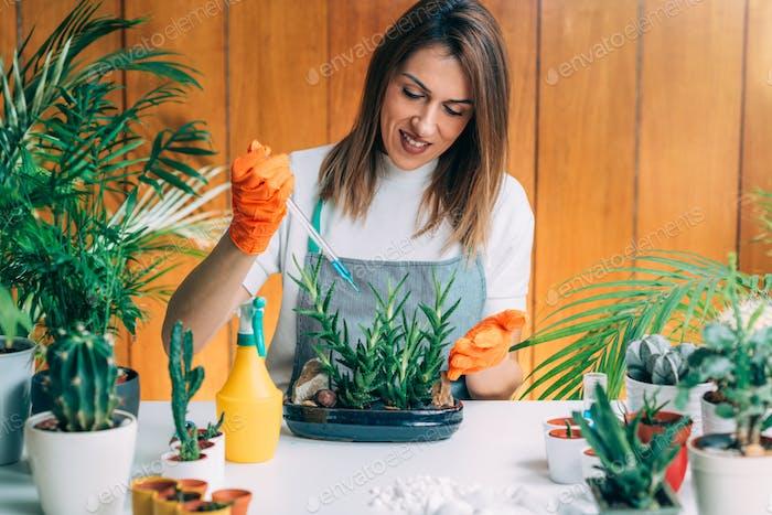 Frau Düngung Pflanzen auf dem Tisch zu Hause