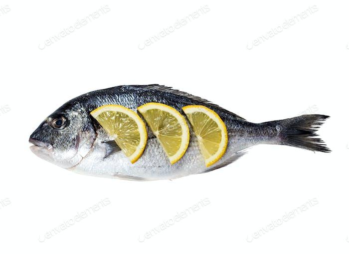 Dorado fish isolated on white background.