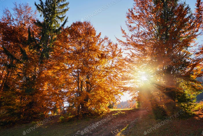 Beautiful autumn bright landscape with the sun shining through t