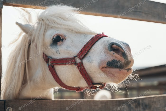 Cutest white horse portrait, lovely face