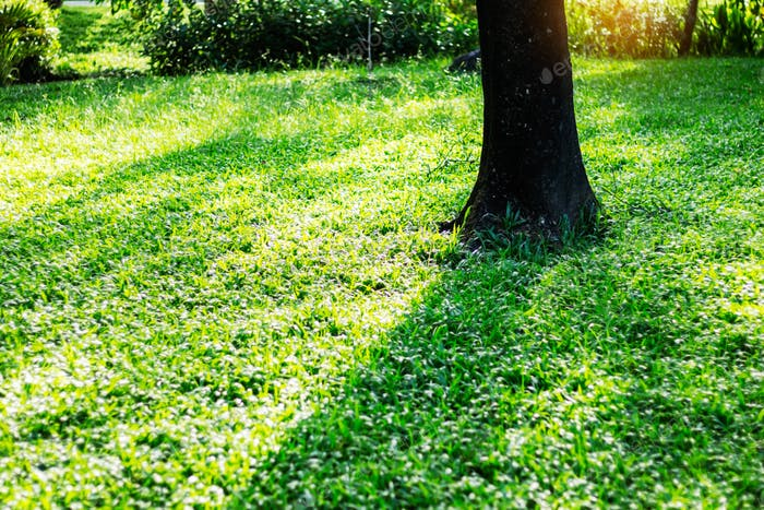 Trees and shadows on grass