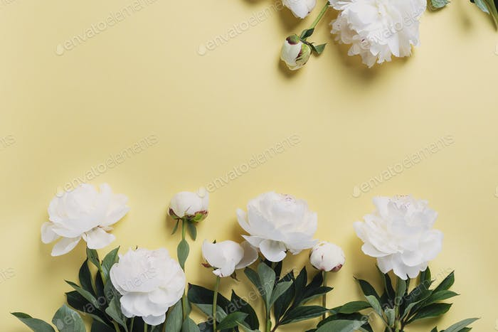 White elegant peony on the yellow background