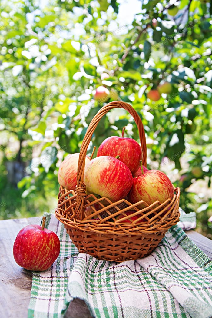 Fresh red apples in a basket on a table in a summer garden