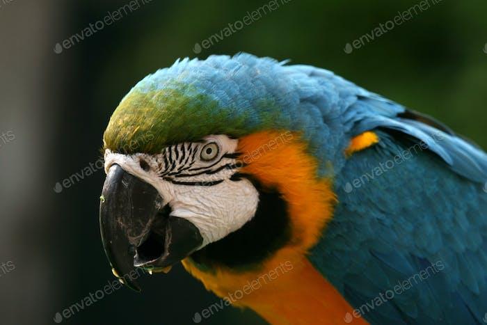 Parrot - Ocean Park, Hong Kong