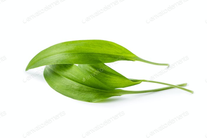 Green wild garlic leaves.