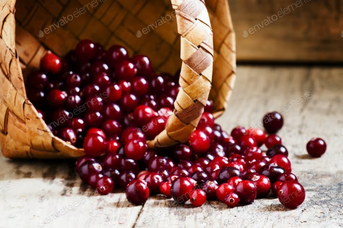 Fresh ripe cranberries poured out of a wicker basket on old wooden table