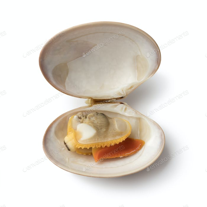 Single open cooked smooth clamon
