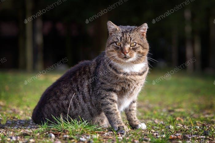 Tabby cat sitting