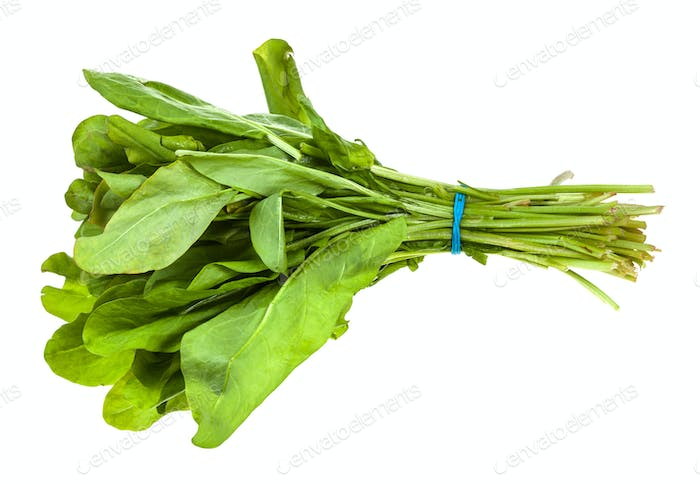 bunch of fresh green sorrel herb isolated