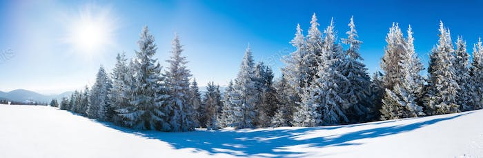 Beautiful snow-covered slope with fir trees