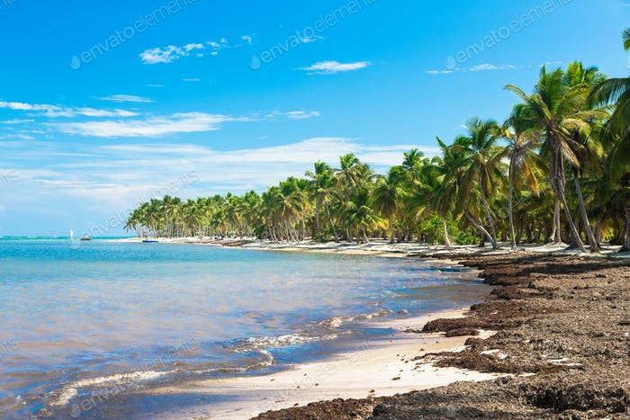 Wild beach with coconut trees, Dominican Republic