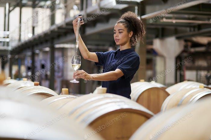 Junge Frau testet Wein in einer Weinfabrik Lager