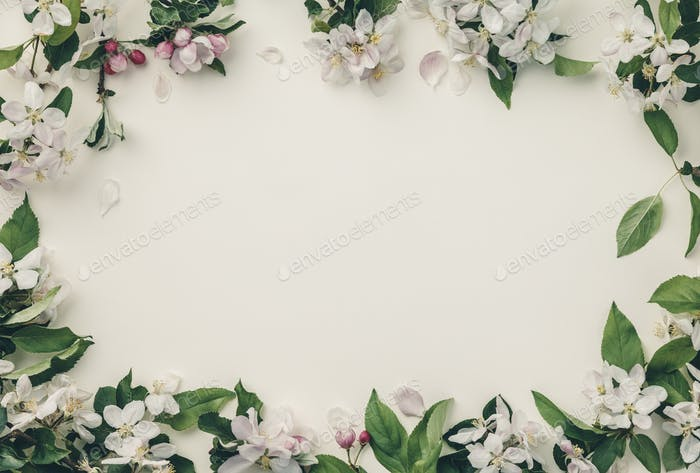 Frame with apple blossoms, spring flower background, top view, flat lay, frame