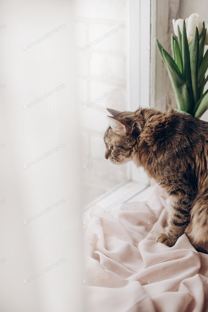 beautiful cat looking with funny emotions at window on background