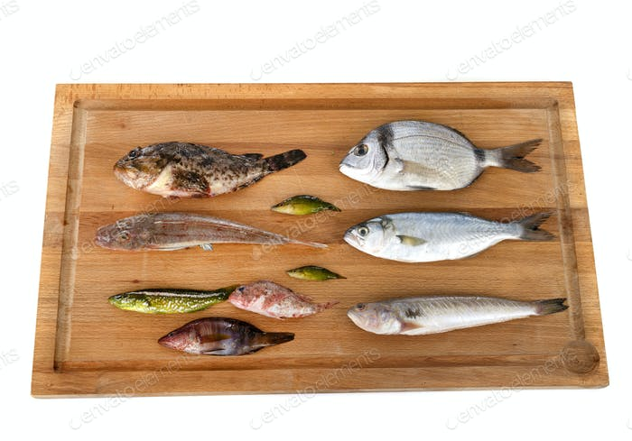 fishes for Fish soup