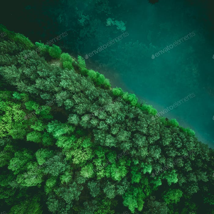 Diagonal forest and lake border, drone view from above