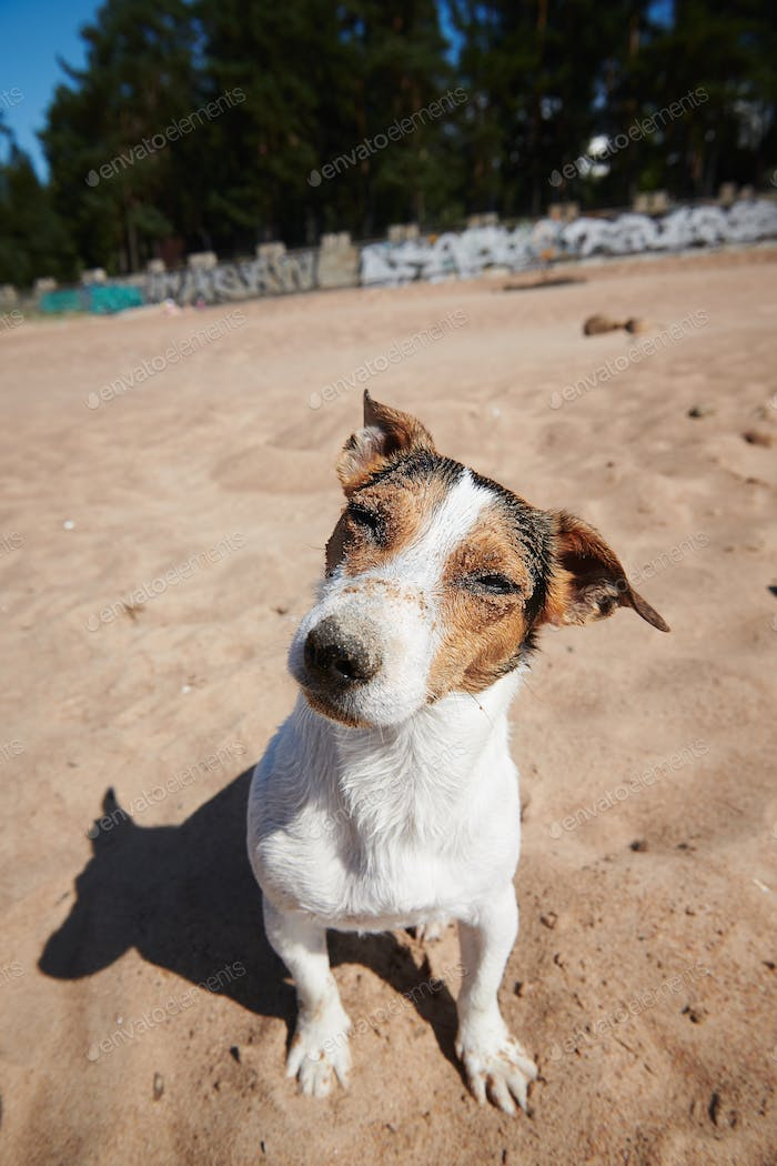 Funny dog on sandy beach