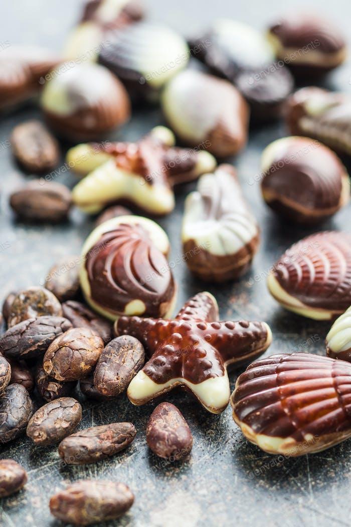 Sweet chocolate seashells.