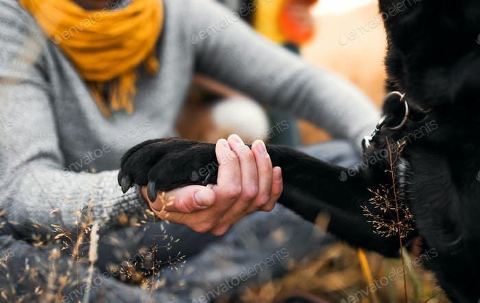 A midsection view of a man holding dog's paw in nature.