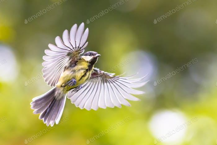 Bird in flight on green garden background