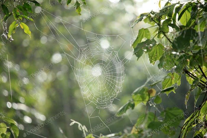 Spinnennetz - Remote Western Uganda