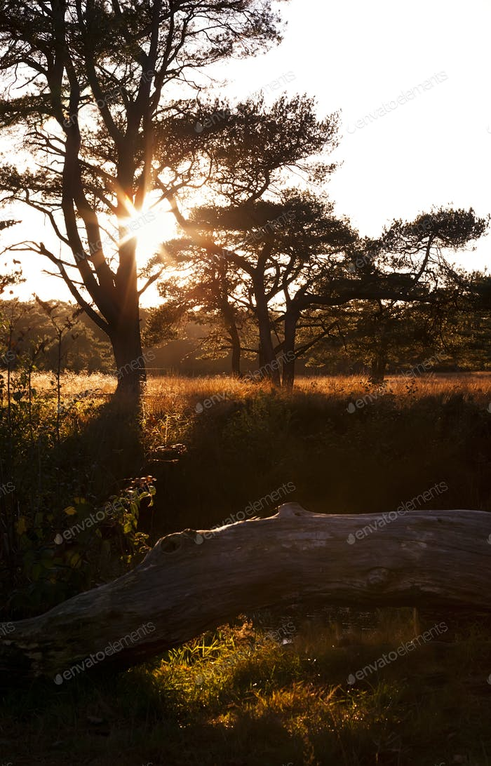 sunbeams behind tree at sunset