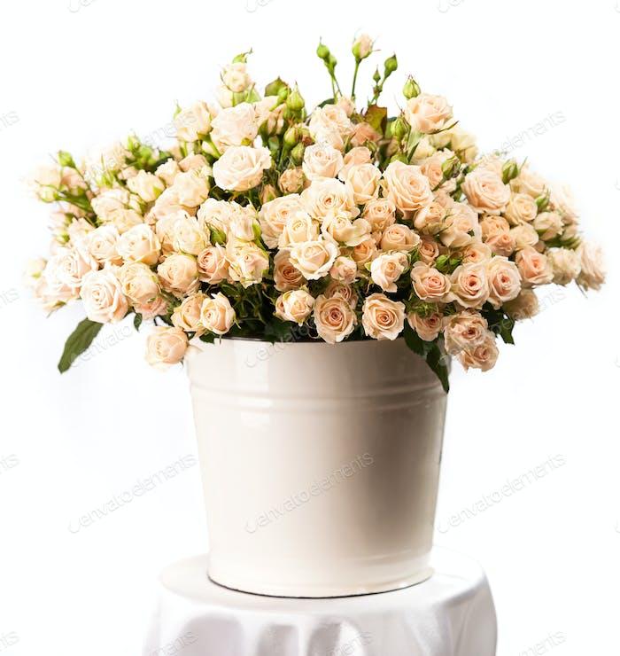 Bündel von cremigen Rosen in einem Eimer über weißem Hintergrund