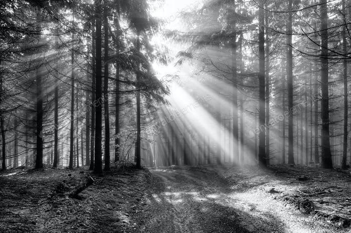 Sun rays over a forest path