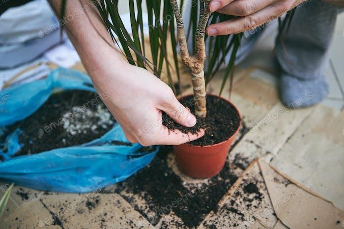 Pflanzen in einen neuen Topf umpflanzen