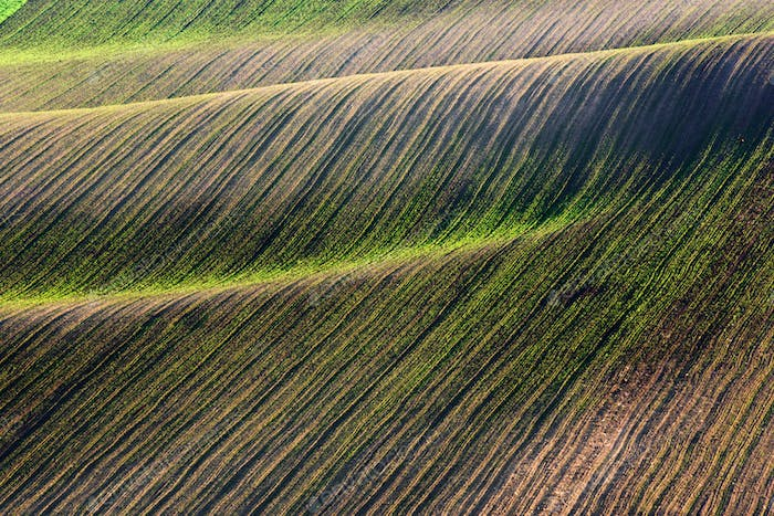 Abstract rural landscape with green rows of crops