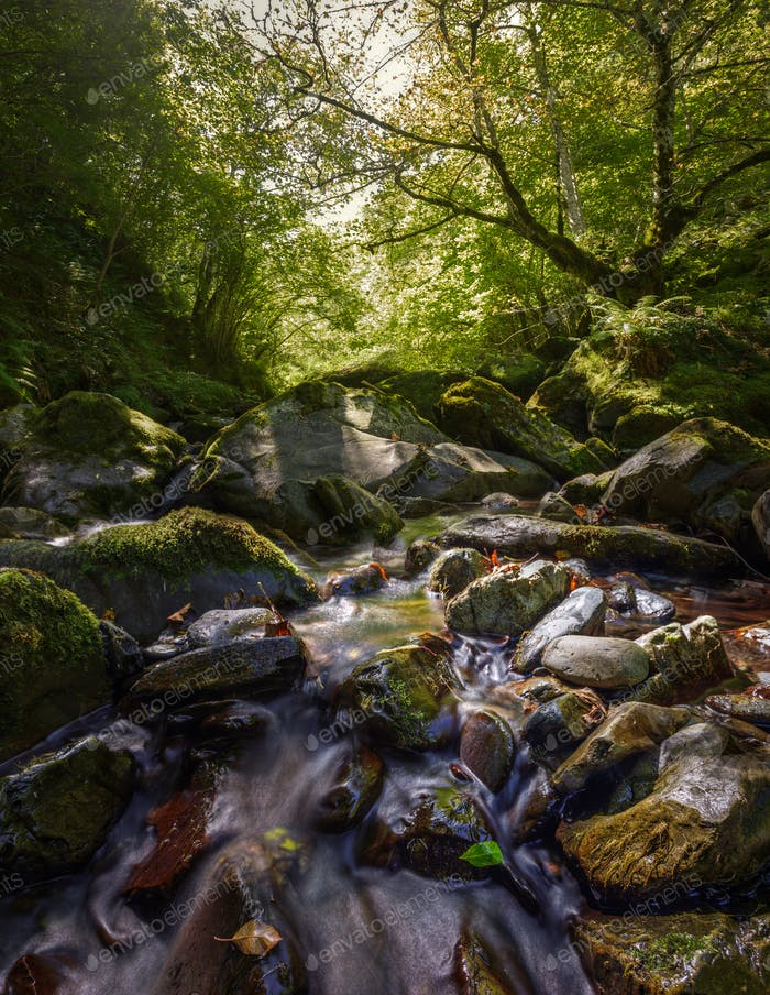 mountain stream through forests