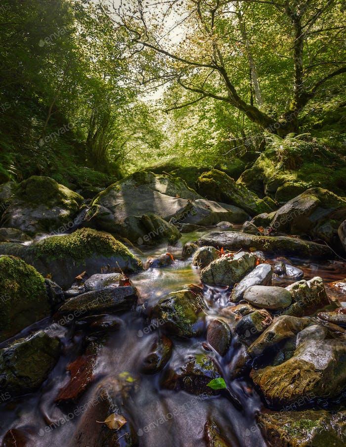 Gebirgsbach durch Wälder