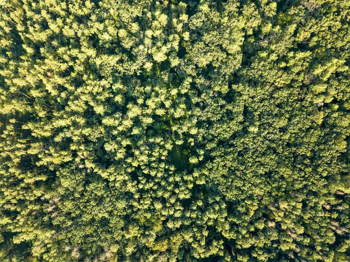 Aerial photograph of a summer day on green foliage forest. Natural background. Environmental