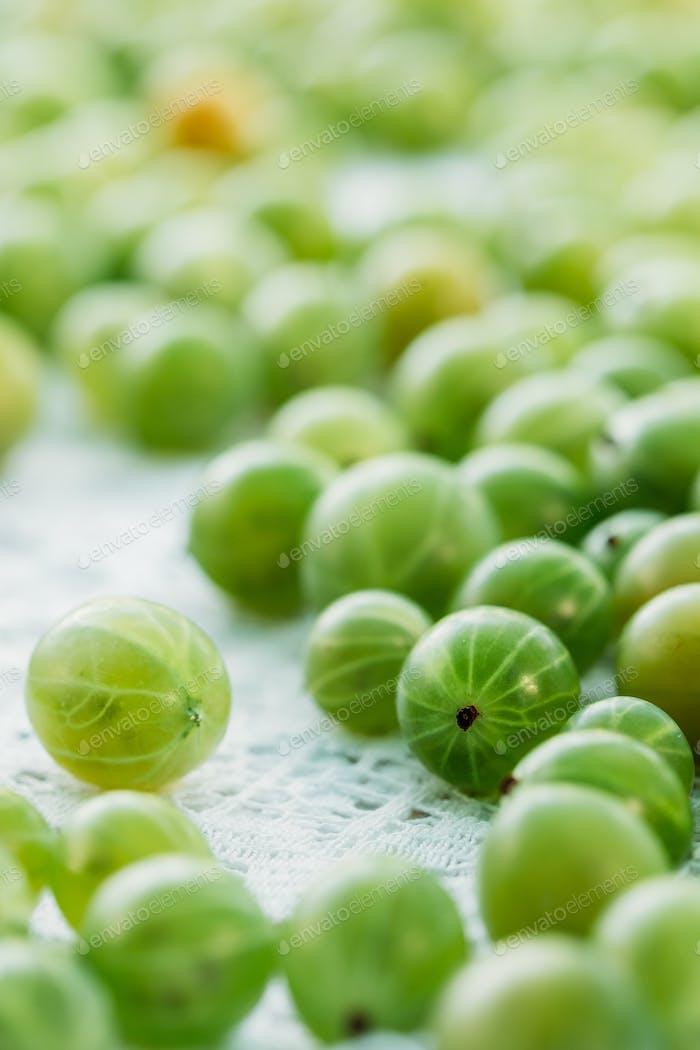 Ripe Fresh Gooseberry Berry, Ribes Uva-Crispa Or Ribes Grossular