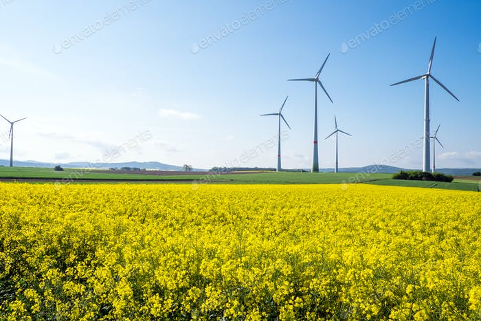 Windwheels and rapeseed in Germany
